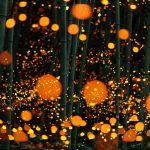 Long Exposure of fireflies in a forest japan